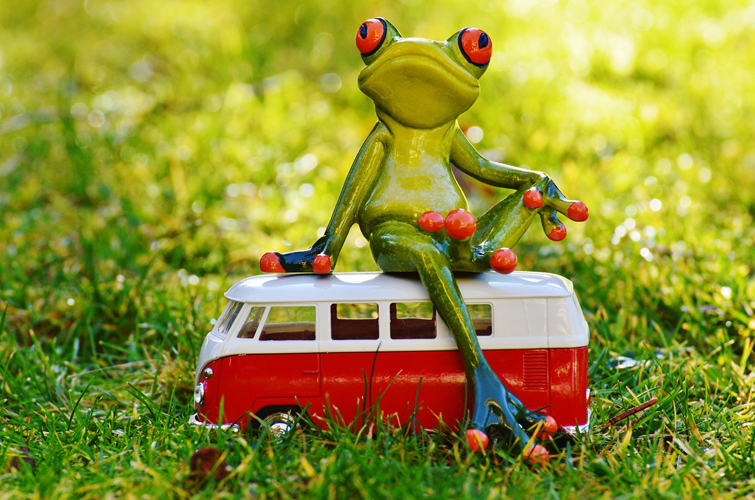 frog-1109777_1280