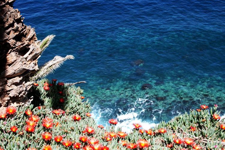 Küste Meer Blumen