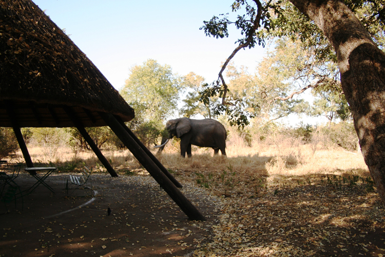 Krüger Nationalpark Südafrika - Elefant