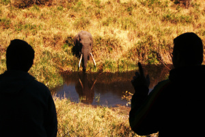 Elefant Krüger Nationalpark Südafrika