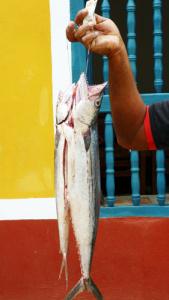 Fischfang Kuba