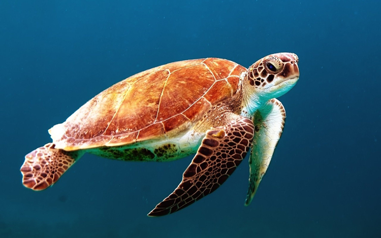 Mallorca Sehenswürdigkeiten Palma Aquarium