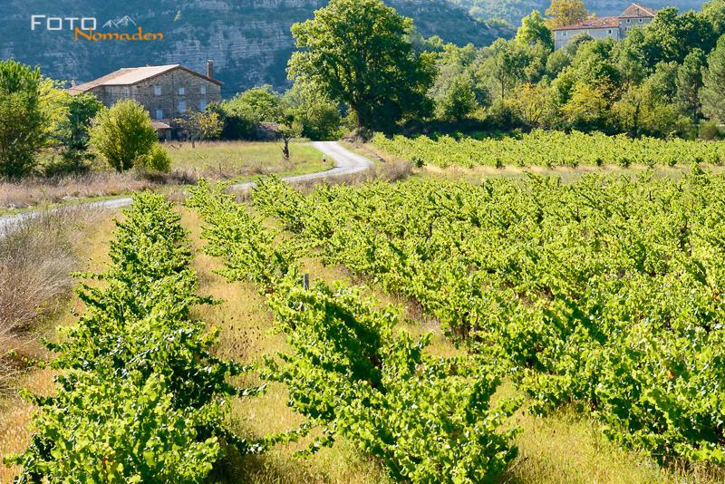 Cevennen: Eine Weinverkostung ist ein Muß!