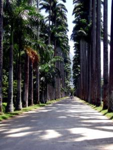 Botanischer Garten Rio de Janeiro