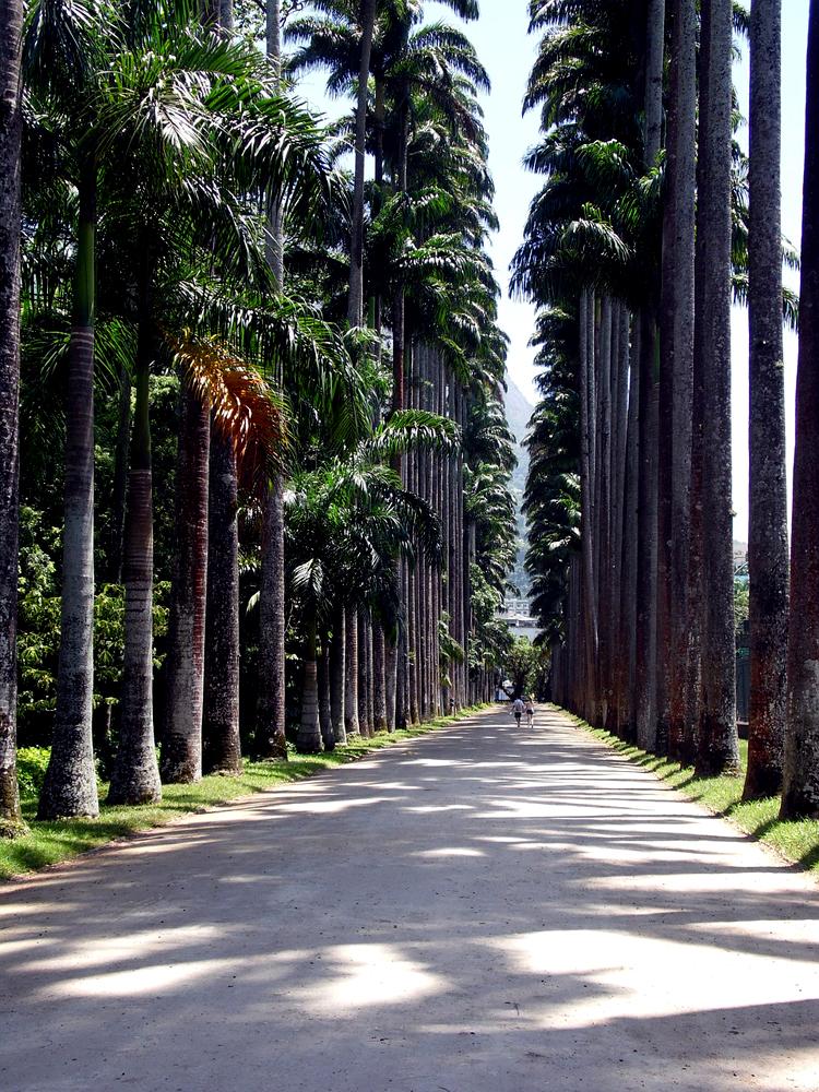 Botanischer Garten Italien Gardasee: Rio-de-janeiro-sehenswuerdigkeiten-botanischer-garten