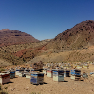 Bienenstöcke Hoher Atlas