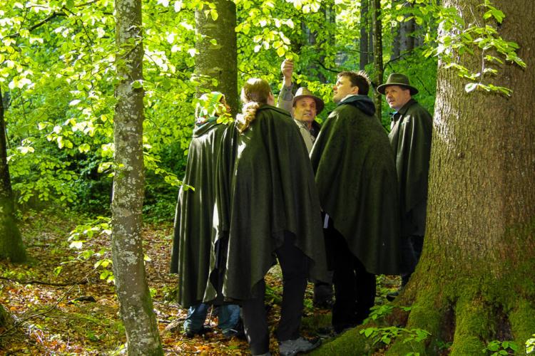 Waldnest im Almtal